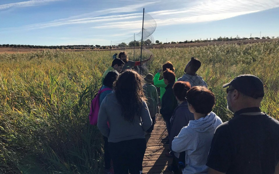 Identificación de plumas, anillamiento y suelta de aves, las actividades del Día Mundial de las Aves en Villafranca de los Caballeros