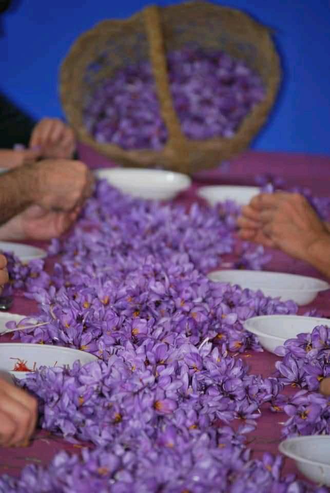 Villafranca de los Caballeros vuelve a poner en valor la pureza y calidad de su azafrán en las Jornadas 2019